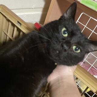 カギしっぽの黒猫ジジ(仮名)