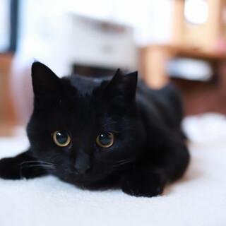 おしゃべりな黒猫女子