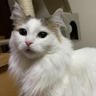 穏やかで人好きな美猫ちゃん