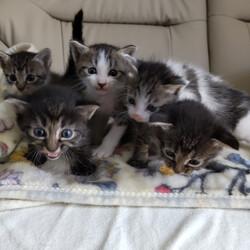 子猫祭りだよ~ とだニャン保護猫里親会