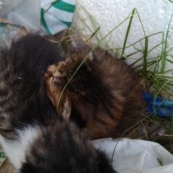 庭に子猫が2匹居て、どうしたら良いですか