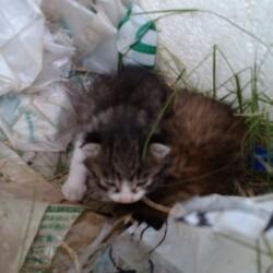 庭に子猫が2匹居て、どうしたら良いですかサムネイル