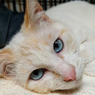 アイスブルーの瞳の甘えん坊さん☆