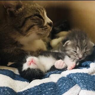 募集中。できたら三匹一緒に。産まれたての可愛い子猫