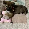 3月3日生まれの女の子 サムネイル2