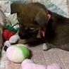 3月3日生まれの女の子 サムネイル7