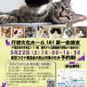 千葉県市川市】イコール保護猫譲渡会vol.7