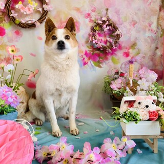アルパカ系美少女★10キロ小さめ中型犬