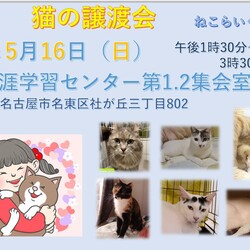 名古屋市名東区 猫の譲渡会