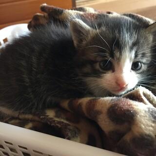生後3週間ほど ふわふわ子猫
