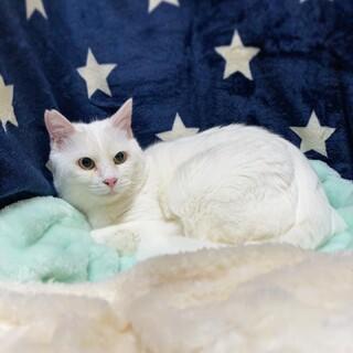 ママが大好き『おもち』くん 白猫