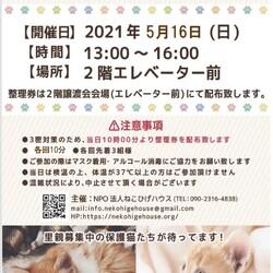 子猫~シニア猫❤足立区島忠大谷田店(千代田線北綾瀬駅から徒歩10分)