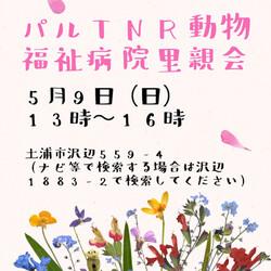 CAPIN ねこ里親会(譲渡会)in土浦 サムネイル1