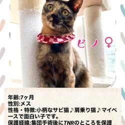 CAPIN ねこ里親会(譲渡会)in土浦 サムネイル3