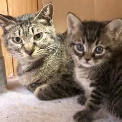 ゲゲゲの鬼太郎組 猫娘と猫息子♬