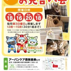 保護猫たちとの完全予約制のお見合い会