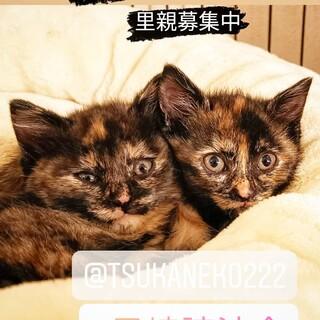 5/23譲渡会★可愛いすぎるサビ子猫多数!!