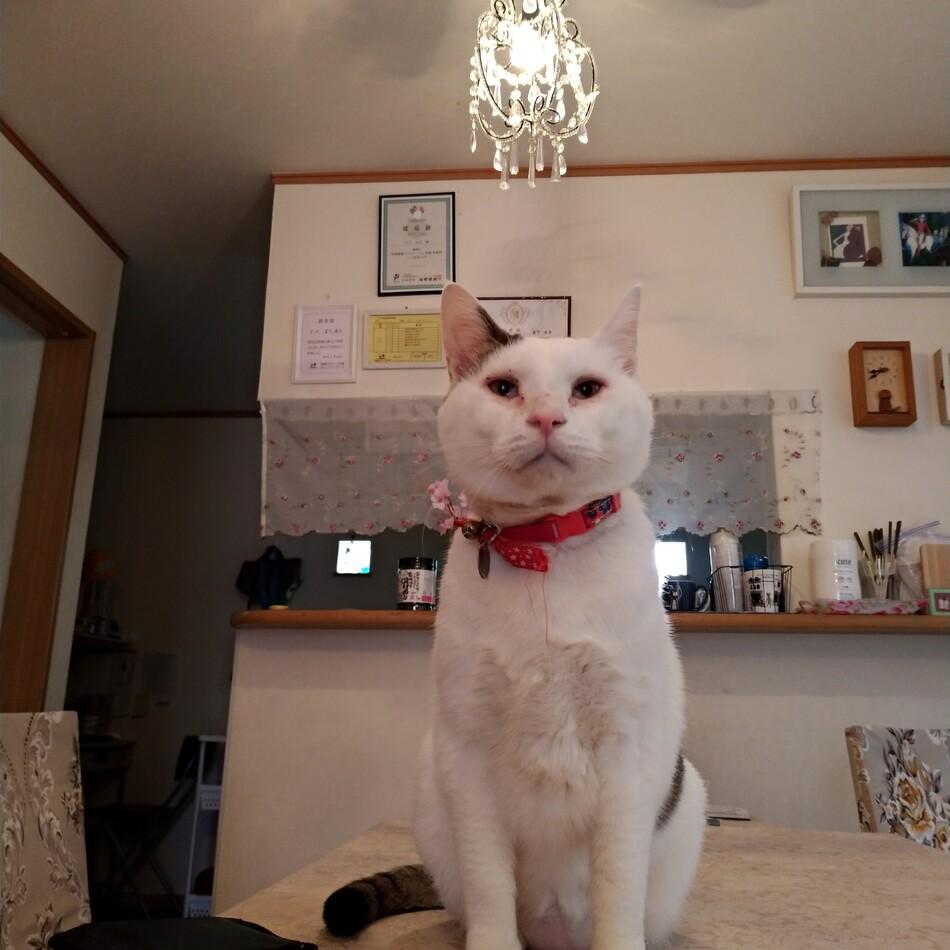 うーちゃんのカバー写真