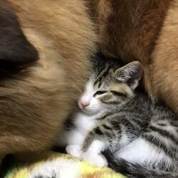 おきなわ美ら猫譲渡会 in 緑区