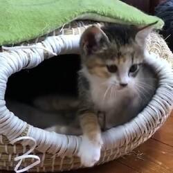 おきなわ美ら猫❤仔猫❤譲渡会 in 天白区 サムネイル2