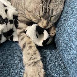 「寝てる」サムネイル1