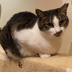 保護猫の里親会 サムネイル2