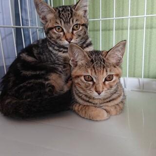 【5/9譲渡会】5姉妹 すごく美猫です