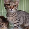 【5/23譲渡会】5姉妹 すごく美猫です サムネイル3