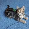 【5/23譲渡会】5姉妹 すごく美猫です サムネイル6