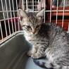 【5/23譲渡会】5姉妹 すごく美猫です サムネイル7