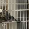 飼育放棄されてる猫を助けて下さい