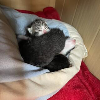 近所の野良猫が子供を産みました