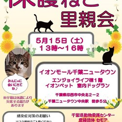 千葉県印西市開催/護猫里親会