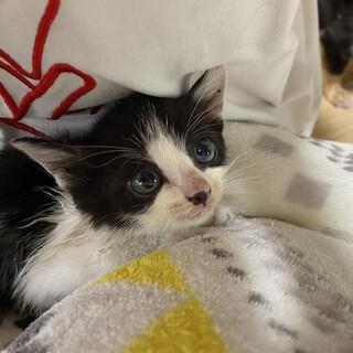 可愛い子猫 里親様募集。