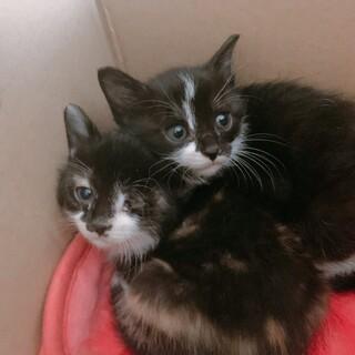家の前で保護した生後1ヶ月半子猫