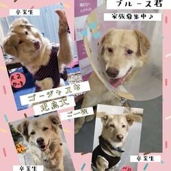 「倉敷のブルース君の応援団→ボランティア譲渡決定!」サムネイル3
