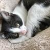 生後二ヶ月の子猫(白黒)