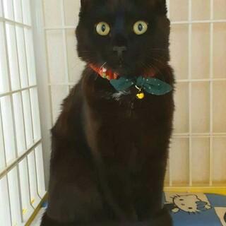 人馴れは完ぺきです♡スリべたな黒猫ちゃんです
