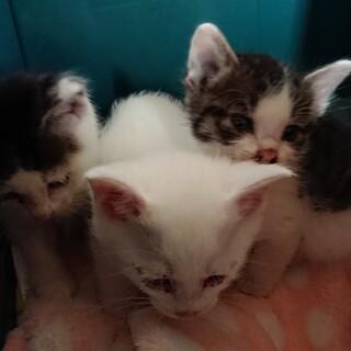 離乳期の子猫3匹、元気です!