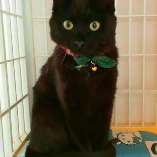 人馴れ最高!ごろスリの黒猫ちゃんです=^_^=