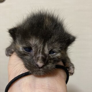 2021/05/01生まれの仔猫です