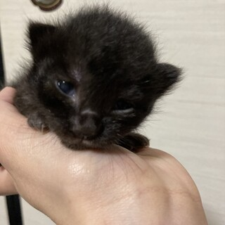 2021/05/01産まれの仔猫です