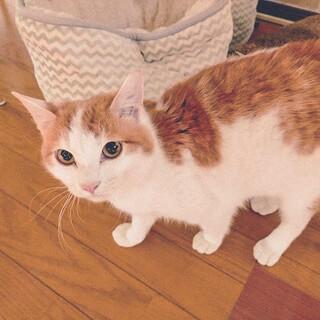 他の猫とすぐに仲良し!尻尾の付け根をポンポンしてね