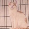 他の猫とすぐに仲良し!尻尾の付け根をポンポンしてね サムネイル2