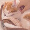 他の猫とすぐに仲良し!尻尾の付け根をポンポンしてね サムネイル5