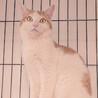 他の猫とすぐに仲良し!尻尾の付け根をポンポンしてね サムネイル3