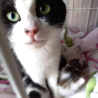 子育て中の母猫ちゃん❤️あまあまごろすり