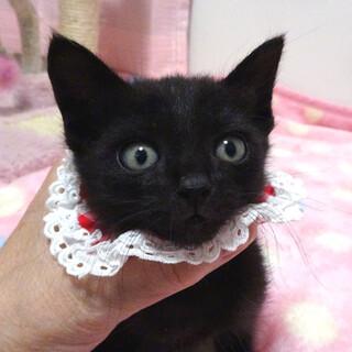 甘えた黒猫♪ももクロちゃん 1ヵ月半