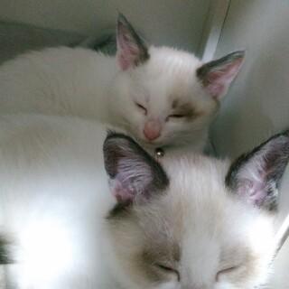 募集していませんッ!可愛い子猫ちゃん2匹♪♪