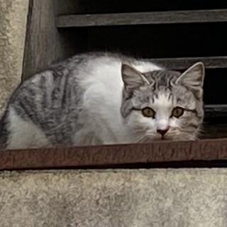 家猫修行中